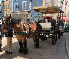Horse & Carriage Ride Tenby